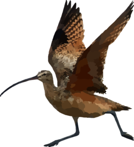 Curlew clipart #19, Download drawings