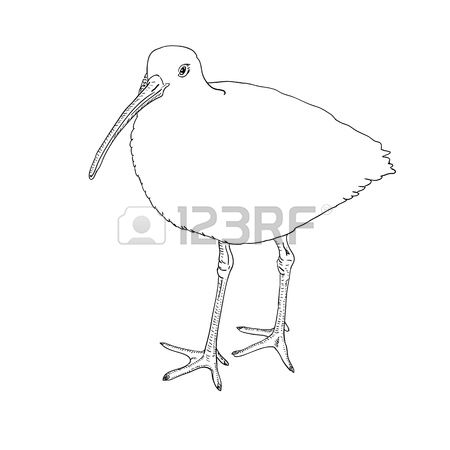 Curlew coloring #2, Download drawings