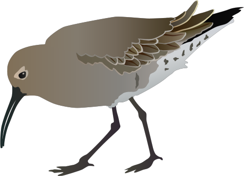 Curlew svg #15, Download drawings