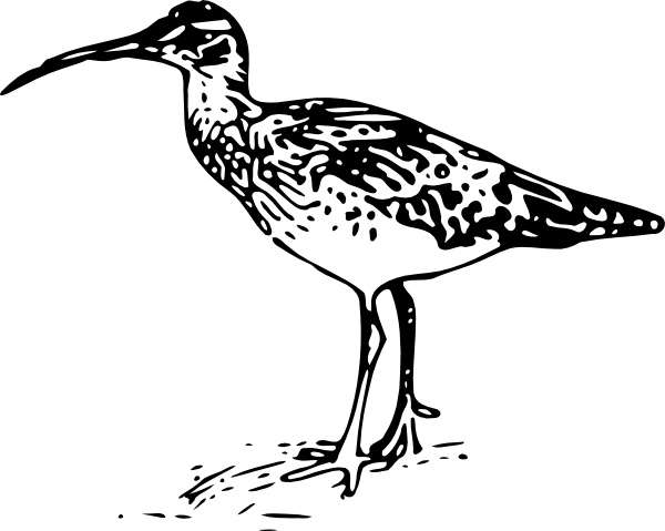 Curlew svg #18, Download drawings