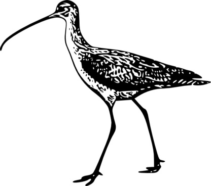 Curlew svg #20, Download drawings