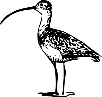 Curlew svg #19, Download drawings