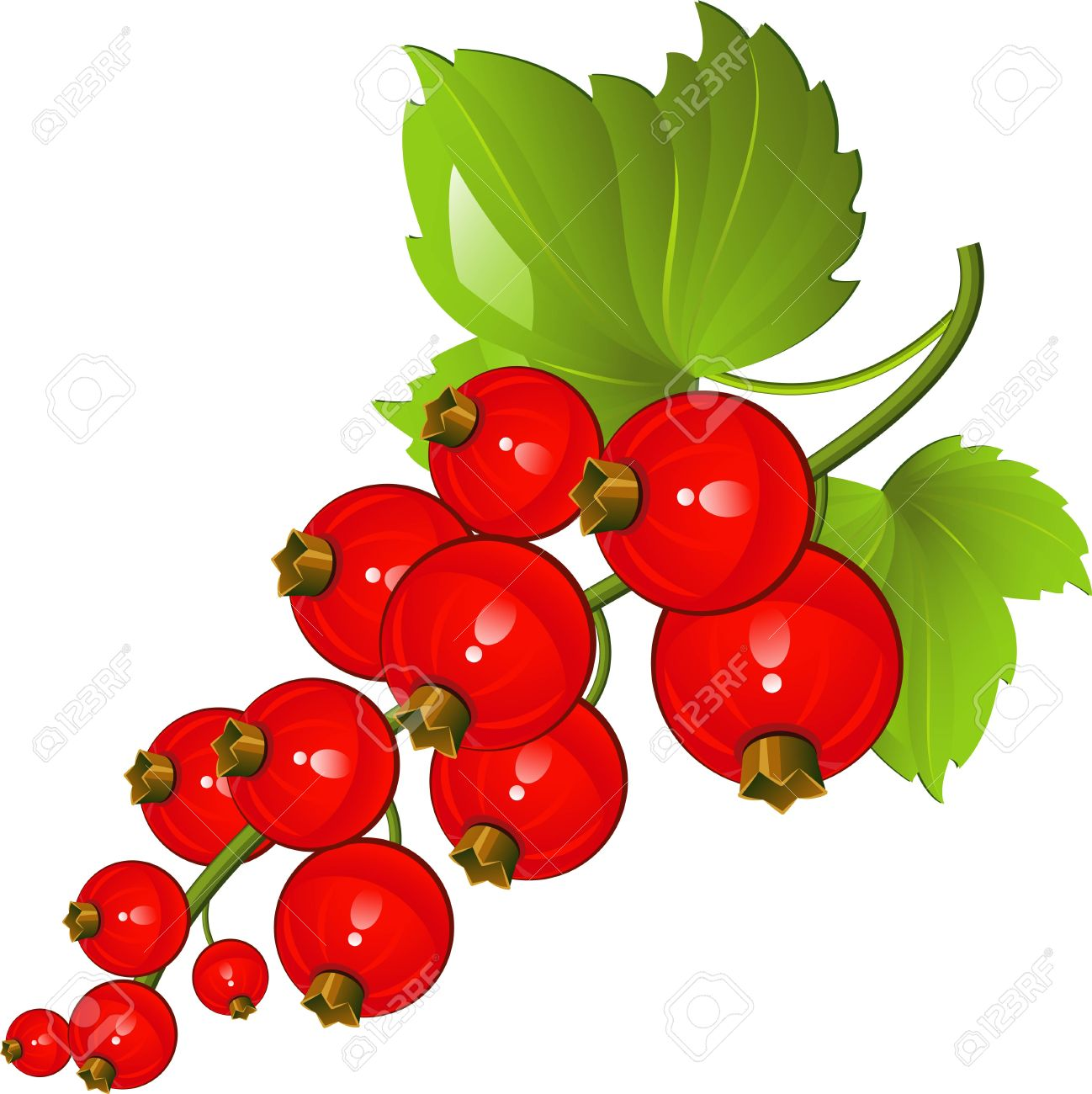 Currants clipart #18, Download drawings