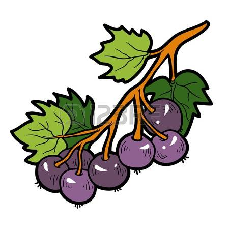 Currants clipart #11, Download drawings
