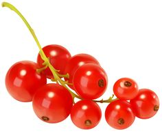 Currants clipart #6, Download drawings