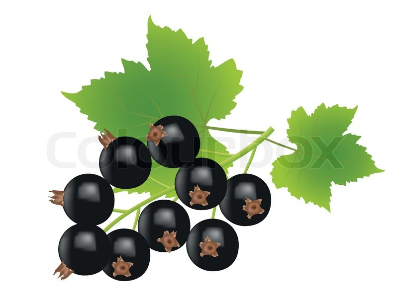 Currants clipart #2, Download drawings