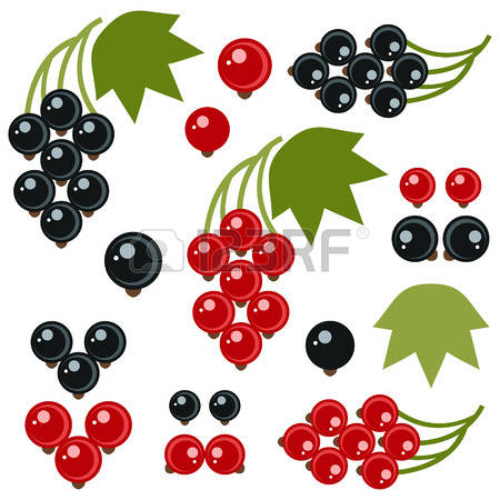 Currants clipart #7, Download drawings