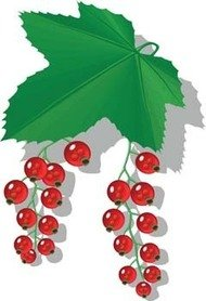 Currants clipart #9, Download drawings