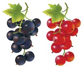 Currants clipart #10, Download drawings