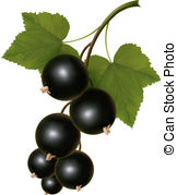 Currants clipart #20, Download drawings