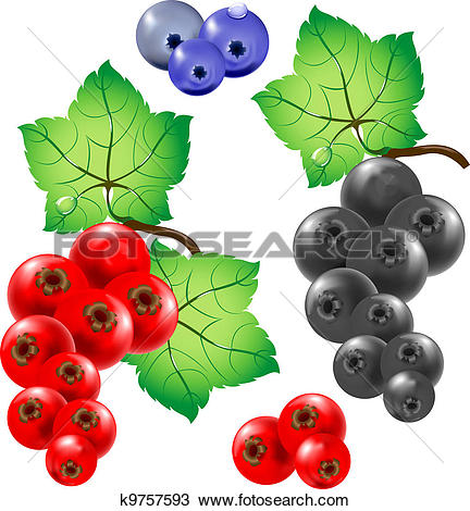 Currants clipart #14, Download drawings