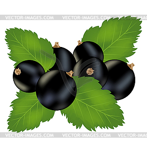Currants clipart #1, Download drawings
