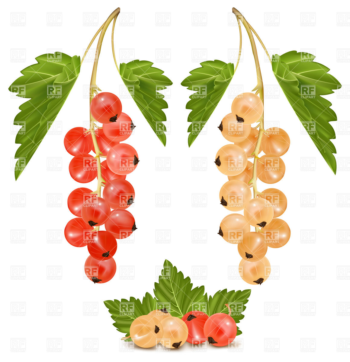 Currants clipart #4, Download drawings
