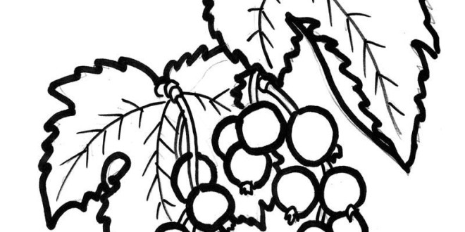 Currants coloring #16, Download drawings