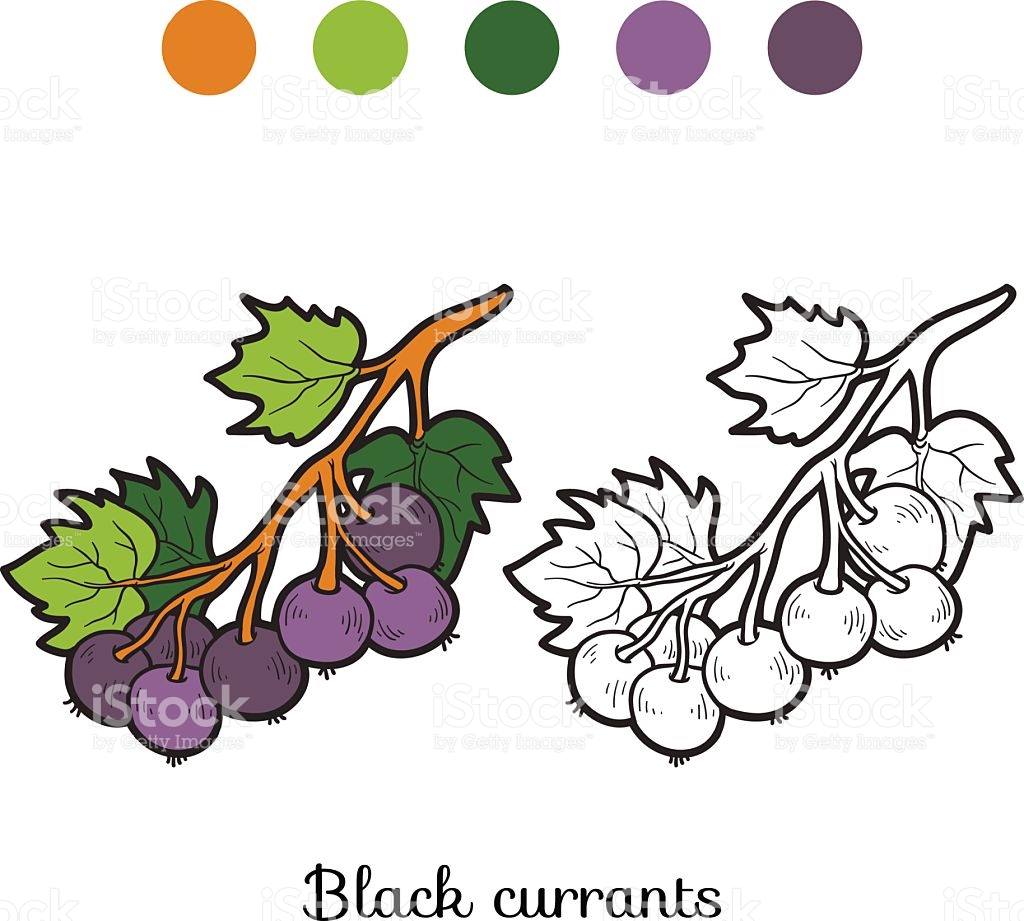 Currants coloring #5, Download drawings