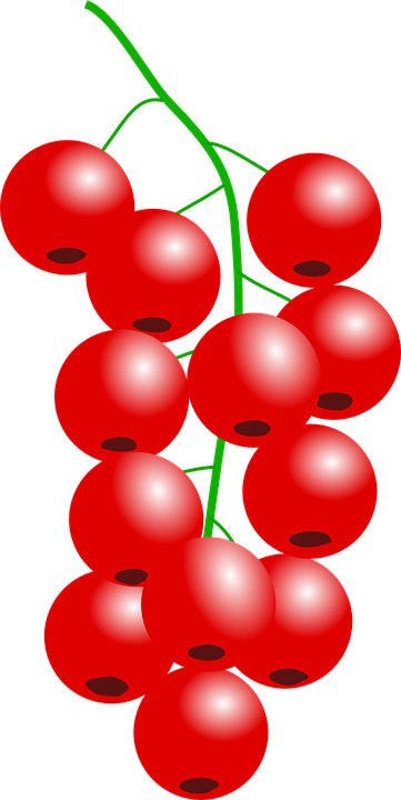 Currants svg #11, Download drawings