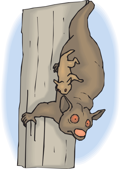 Cuscus clipart #10, Download drawings