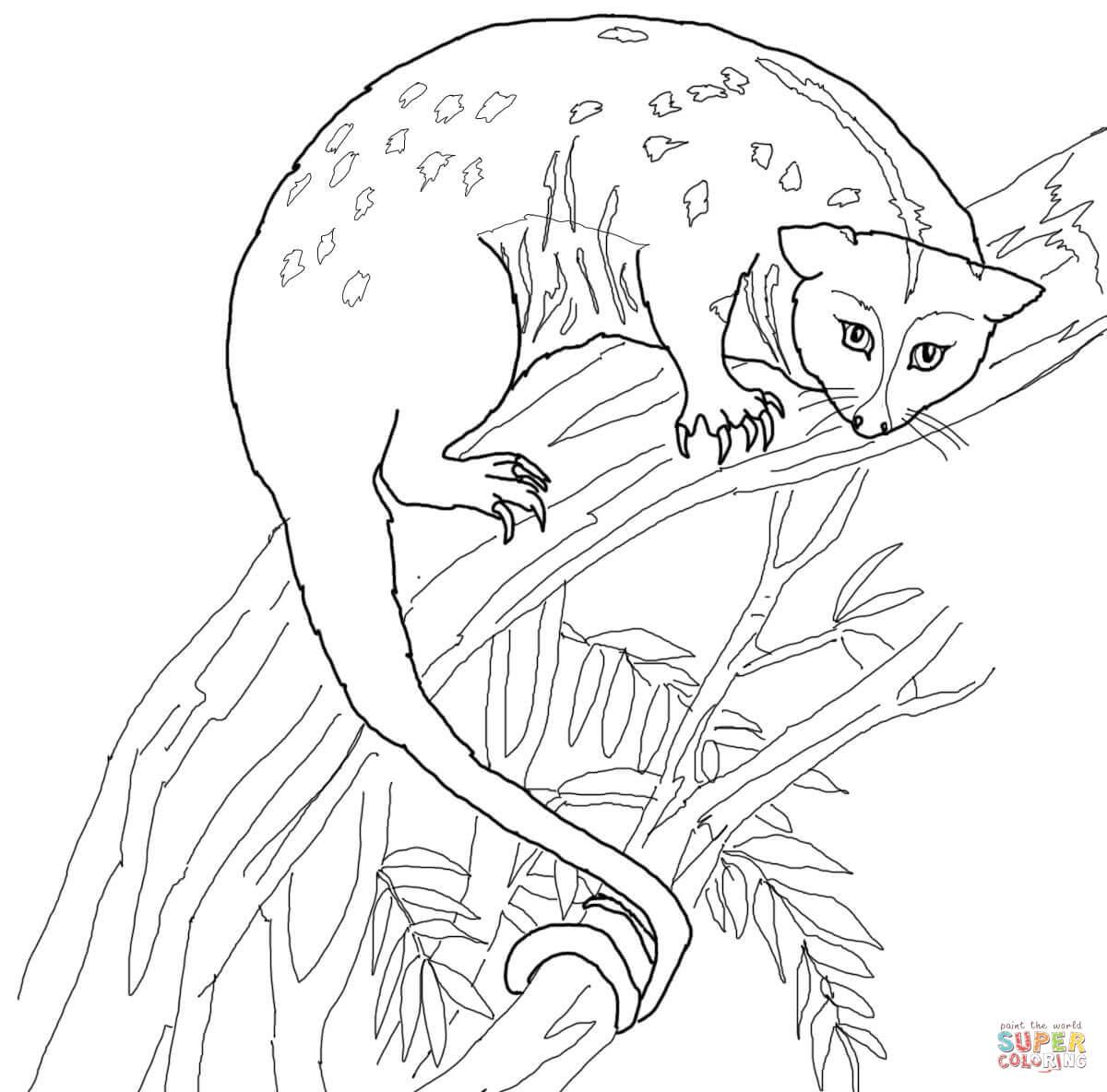 Cuscus coloring #6, Download drawings