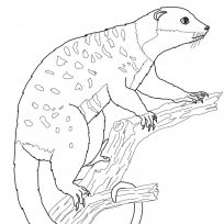 Cuscus coloring #20, Download drawings