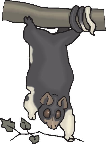 Cuscus svg #19, Download drawings