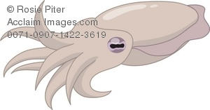 Cuttlefish clipart #16, Download drawings