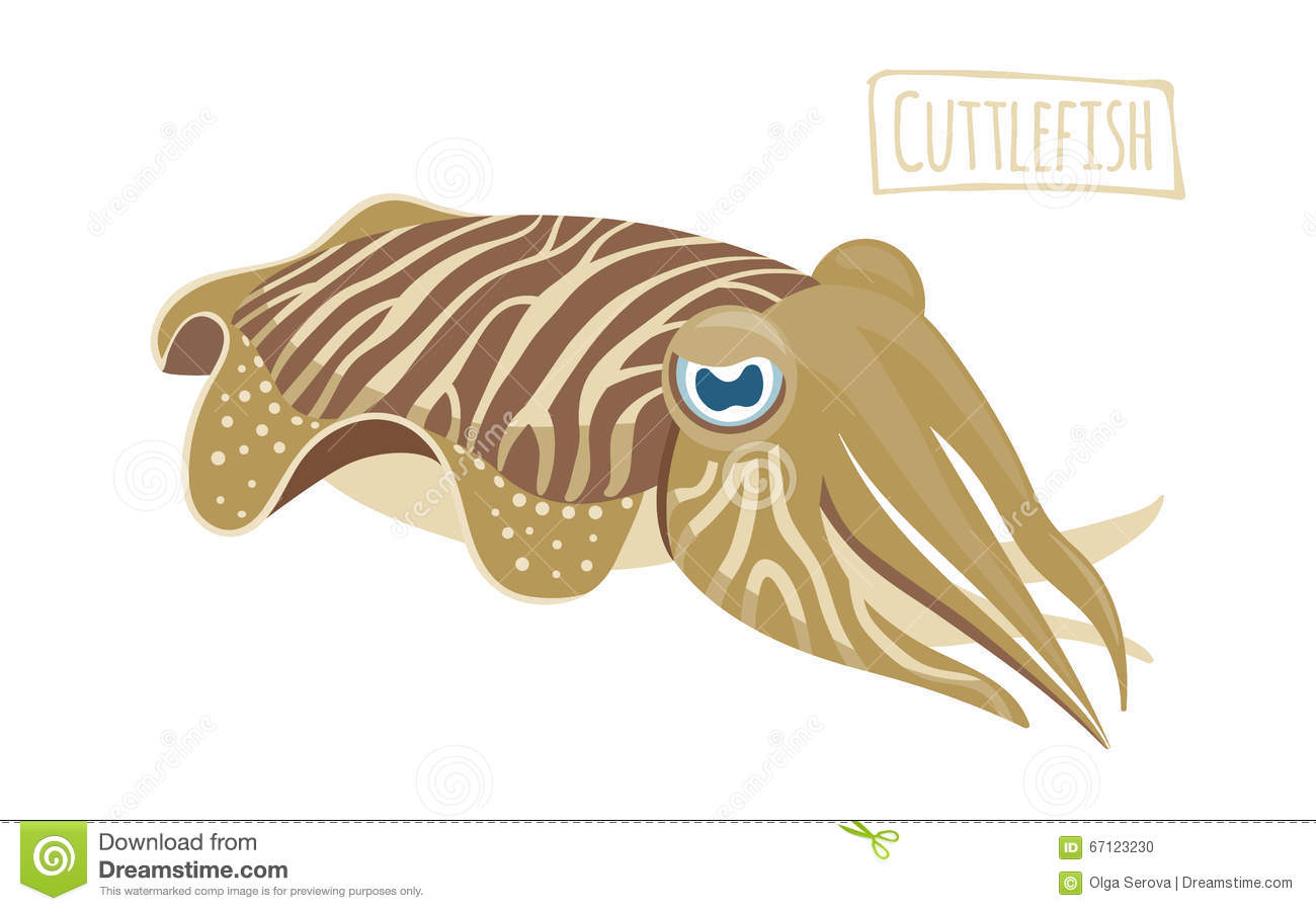 Cuttlefish clipart #17, Download drawings