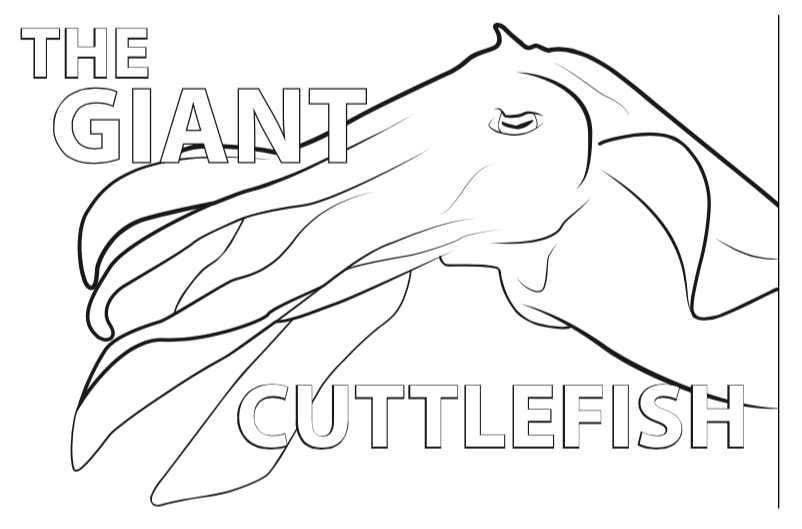 Cuttlefish coloring #10, Download drawings