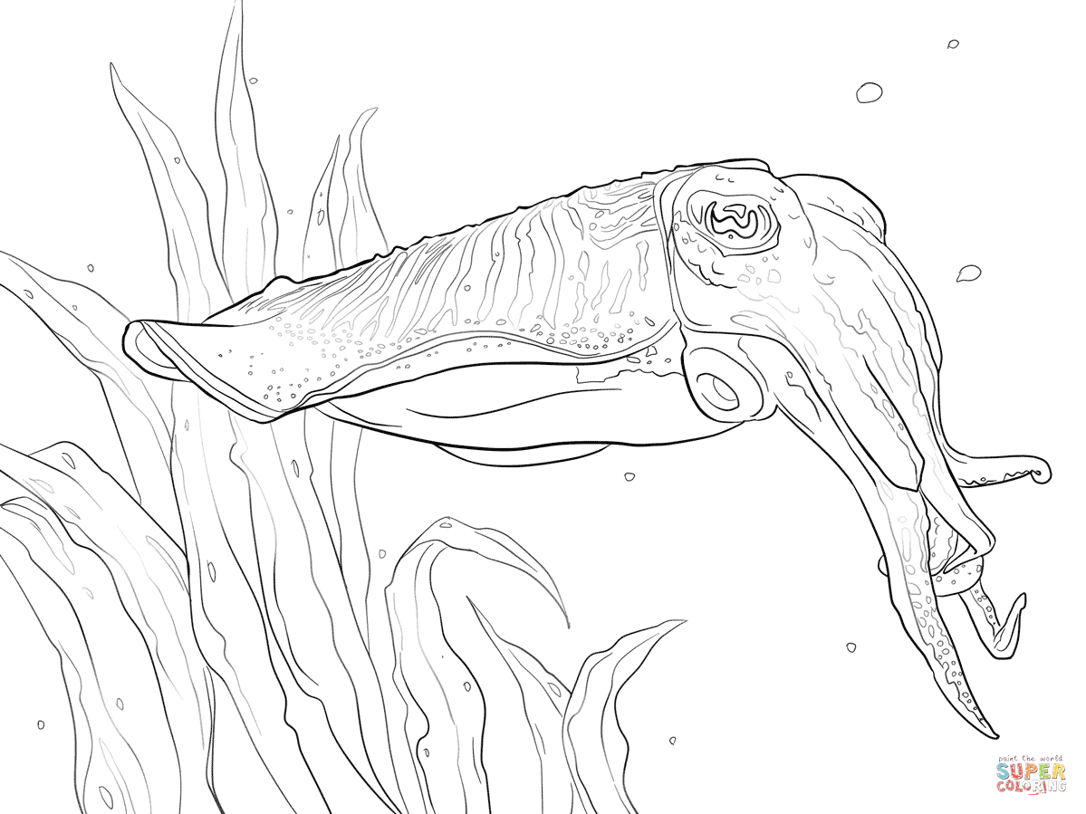 Cuttlefish coloring #2, Download drawings