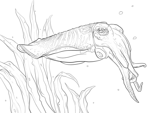 Cuttlefish coloring #16, Download drawings