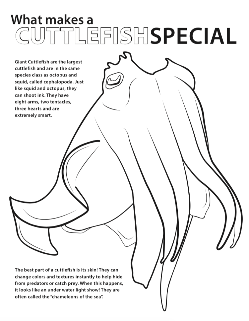 Cuttlefish coloring #4, Download drawings