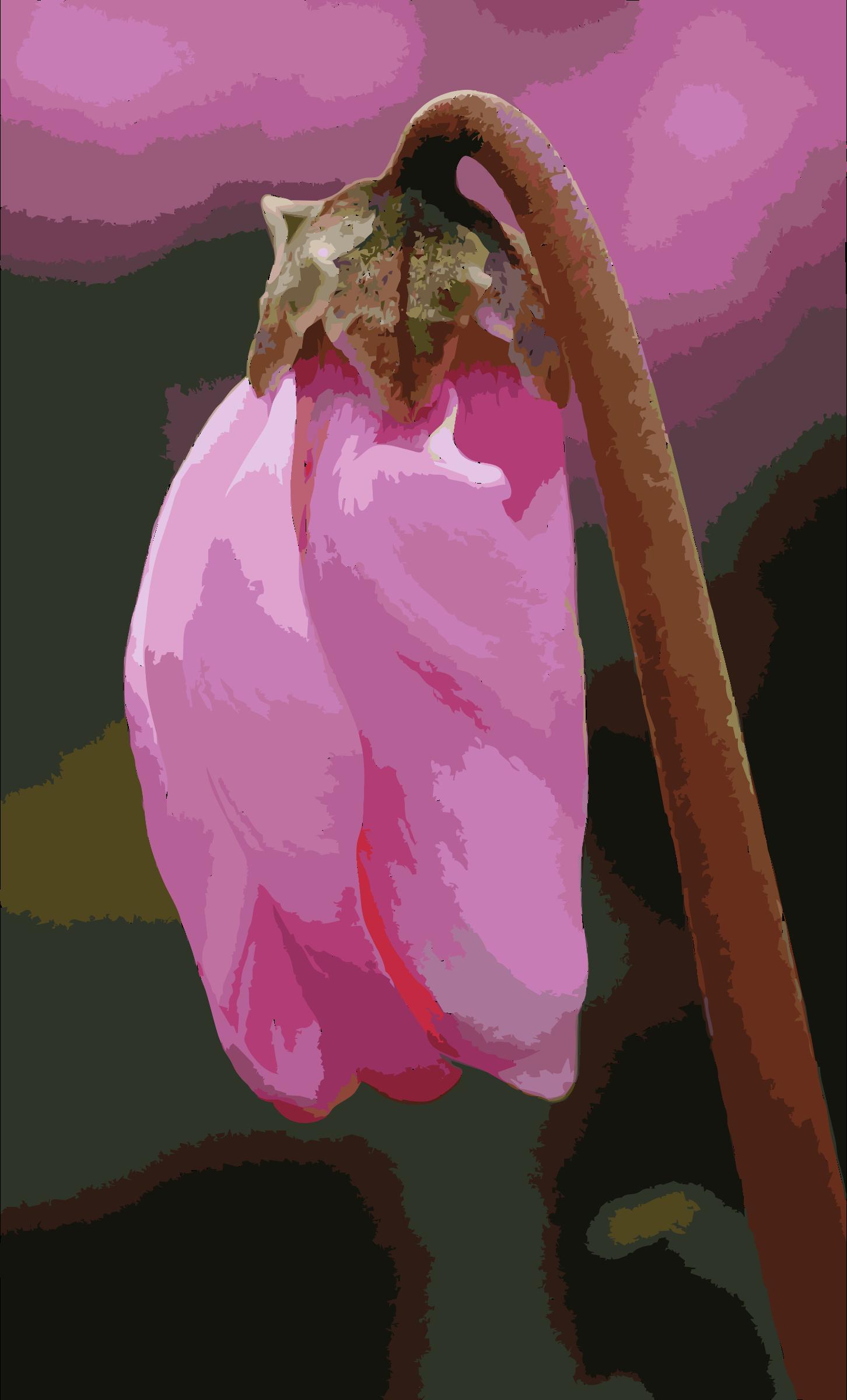 Cyclamen svg #12, Download drawings
