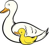 Cygnet clipart #19, Download drawings