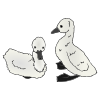 Cygnet clipart #2, Download drawings