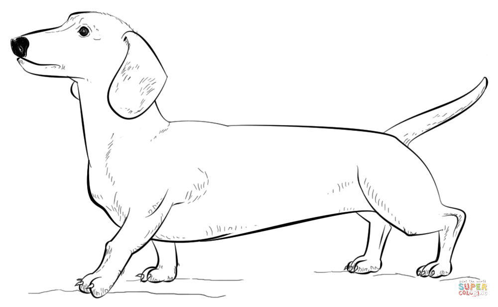 Dachshund coloring #13, Download drawings