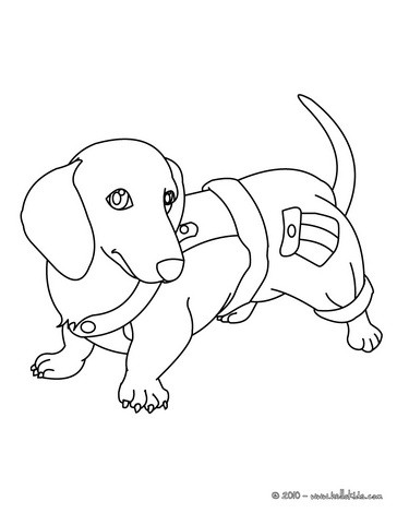 Dachshund coloring #6, Download drawings