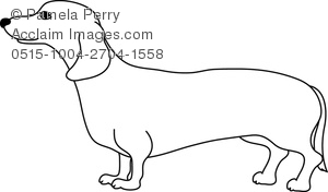 Dachshund coloring #1, Download drawings