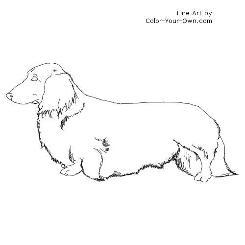 Dachshund coloring #7, Download drawings