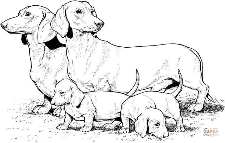 Dachshund coloring #9, Download drawings