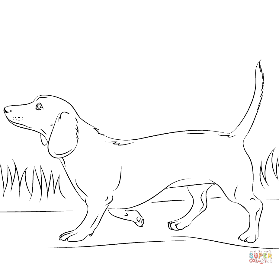 Dachshund coloring #8, Download drawings