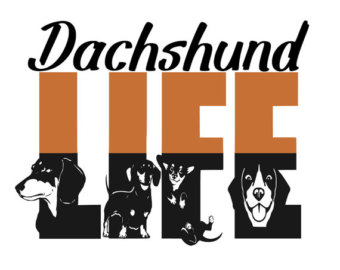 Dachshund svg #19, Download drawings