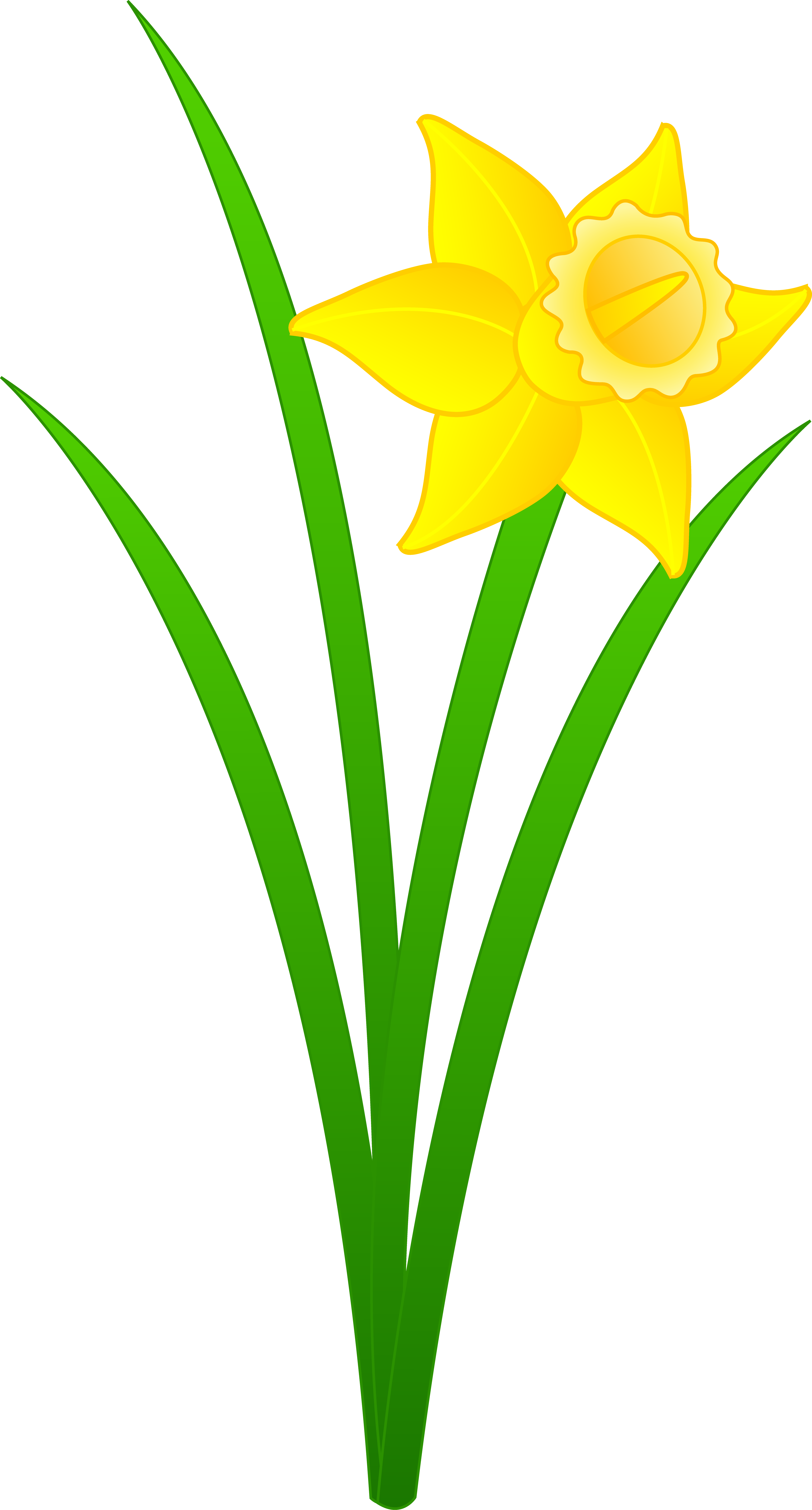 Daffodil clipart #5, Download drawings
