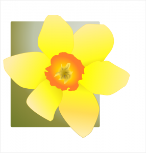 Daffodil clipart #6, Download drawings