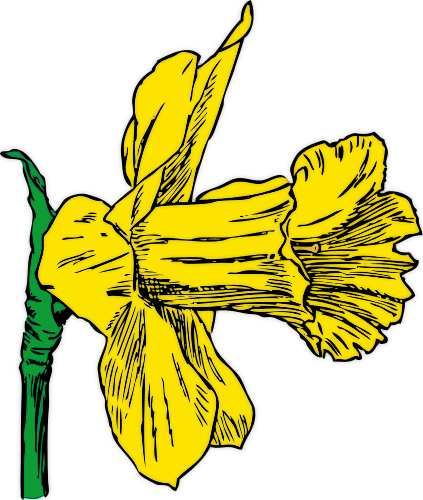 Daffodil clipart #12, Download drawings