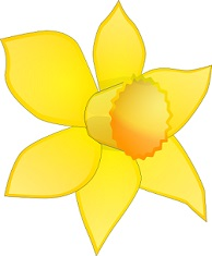 Daffodil clipart #20, Download drawings