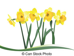 Daffodil clipart #14, Download drawings
