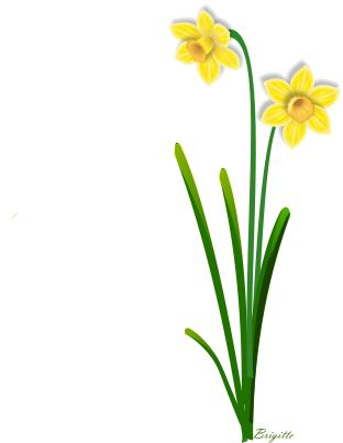 Daffodil clipart #13, Download drawings