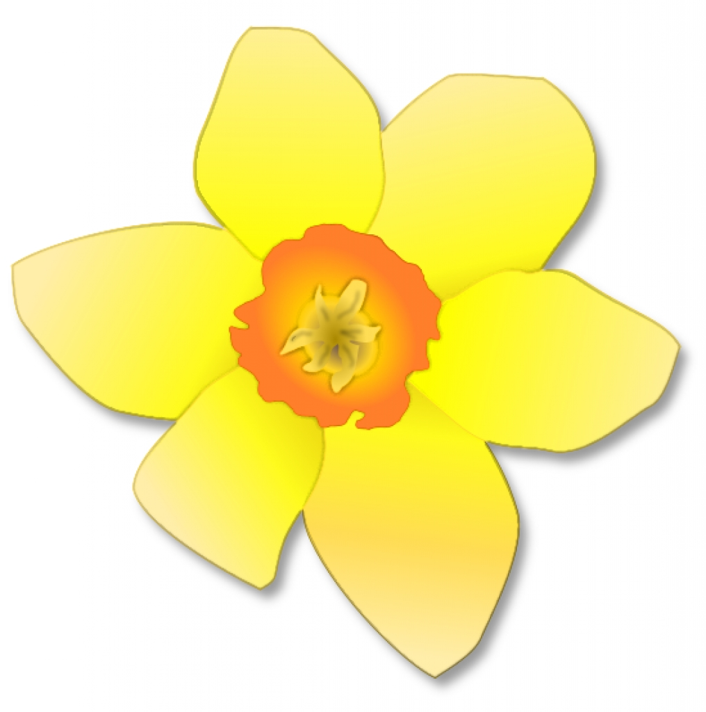 Daffodil clipart #15, Download drawings
