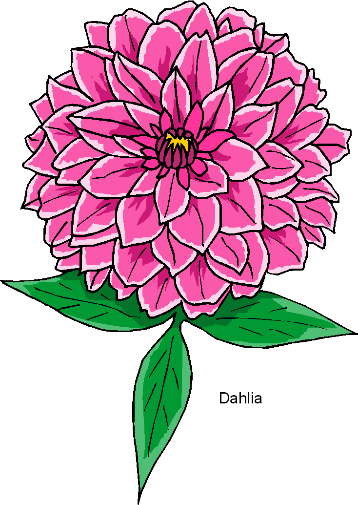 Dahlia clipart #9, Download drawings