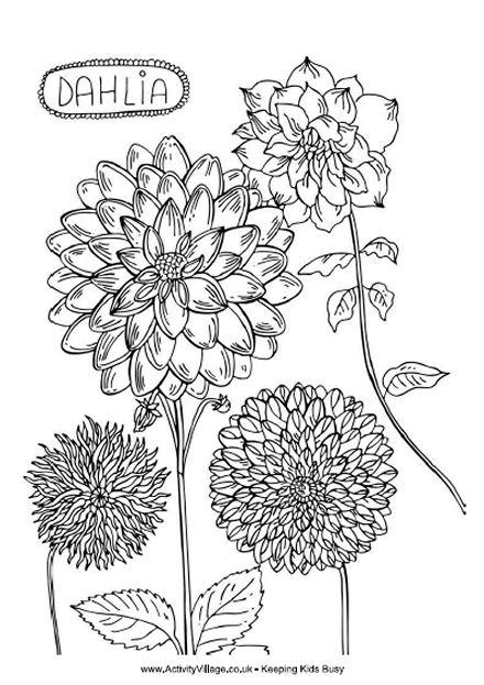 Dahlia coloring #2, Download drawings