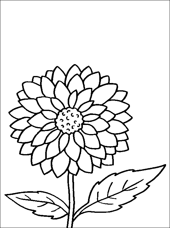 Dahlia coloring #13, Download drawings
